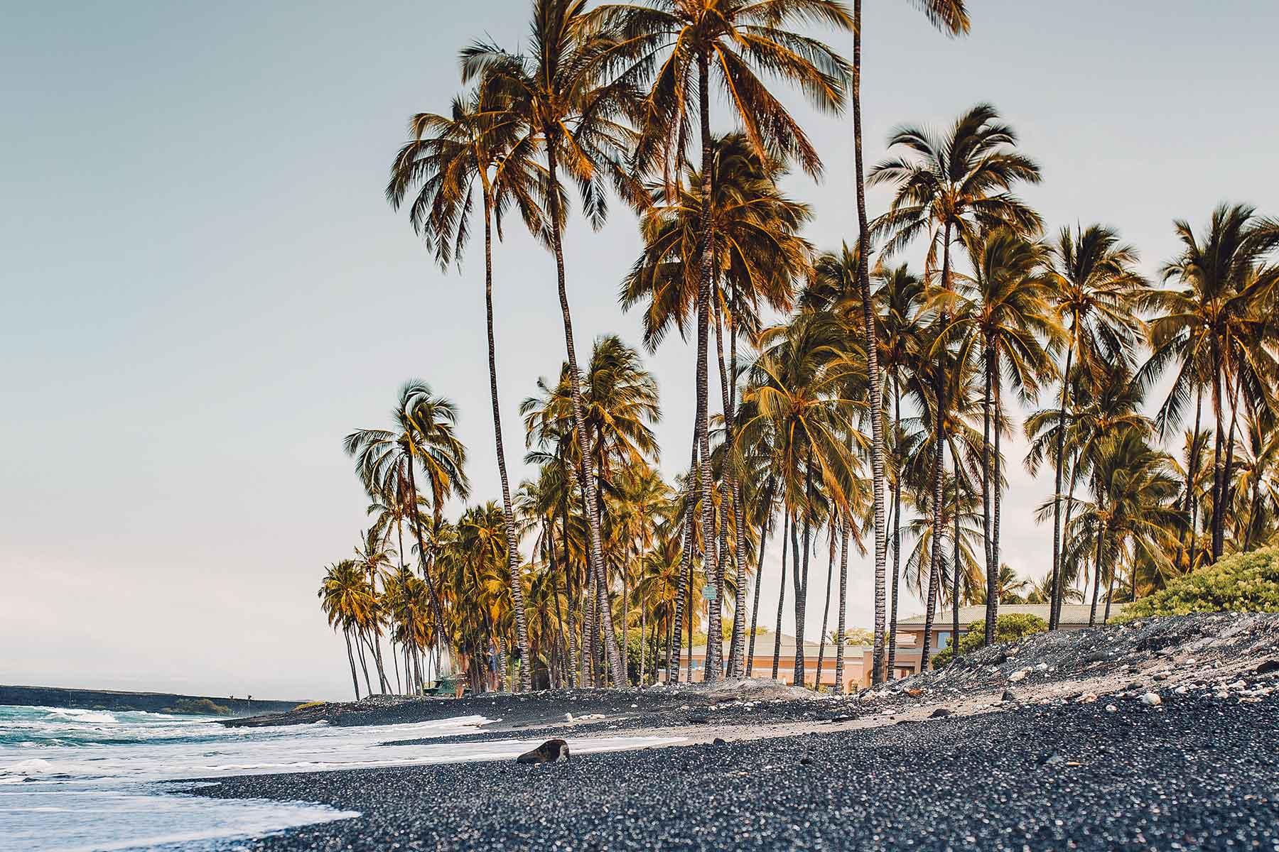 Skräddarsydda-resor-till-Hawaii-hos-Nygren-&-Lind-resebyrå---strand-med-palmer