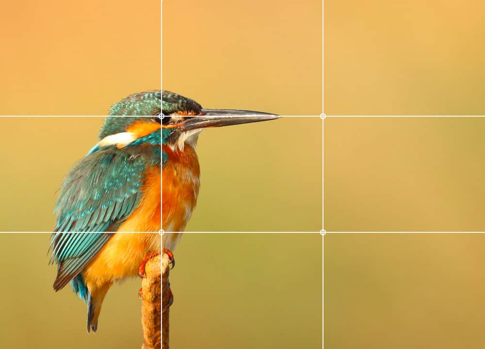 rule of thirds Best Photography Tips for Beginners