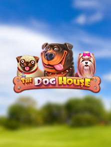 the dog house videoslot Pragmatic Play