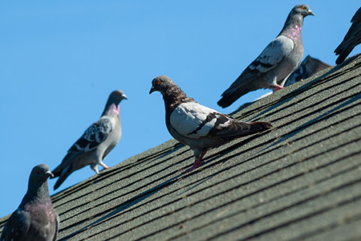bird abatement and removal