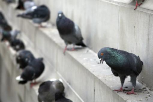 Bird Abatement and Control