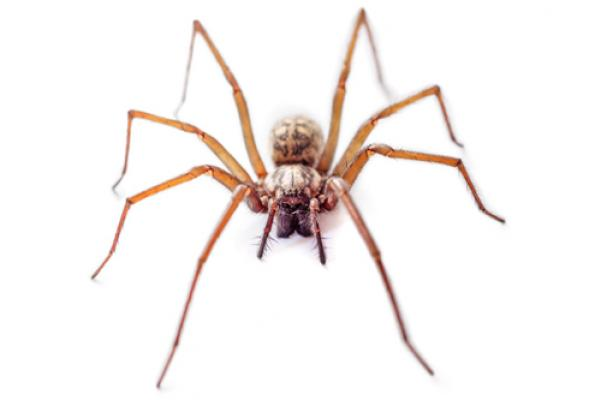 spider elimination
