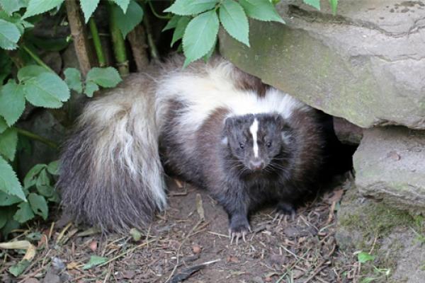 slunk and wildlife control