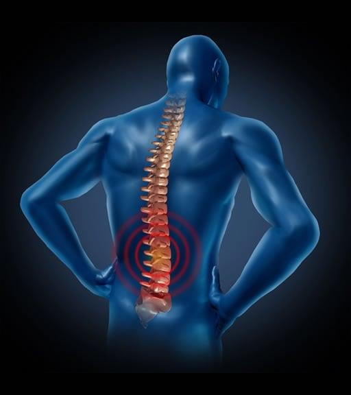colonna vertebrale