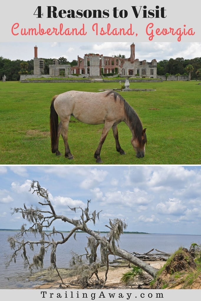 When you visit Cumberland Island, Georgia, it feels like you are being transported to another, more simple time. Read more about this unique outdoor oasis and the nature including wild horses. #cumberlandisland #georgia #wildlife #hiking #ruins