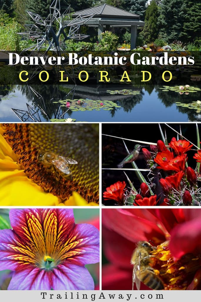 Picture Perfect: Self-Guided Denver Botanic Gardens Photo Tour