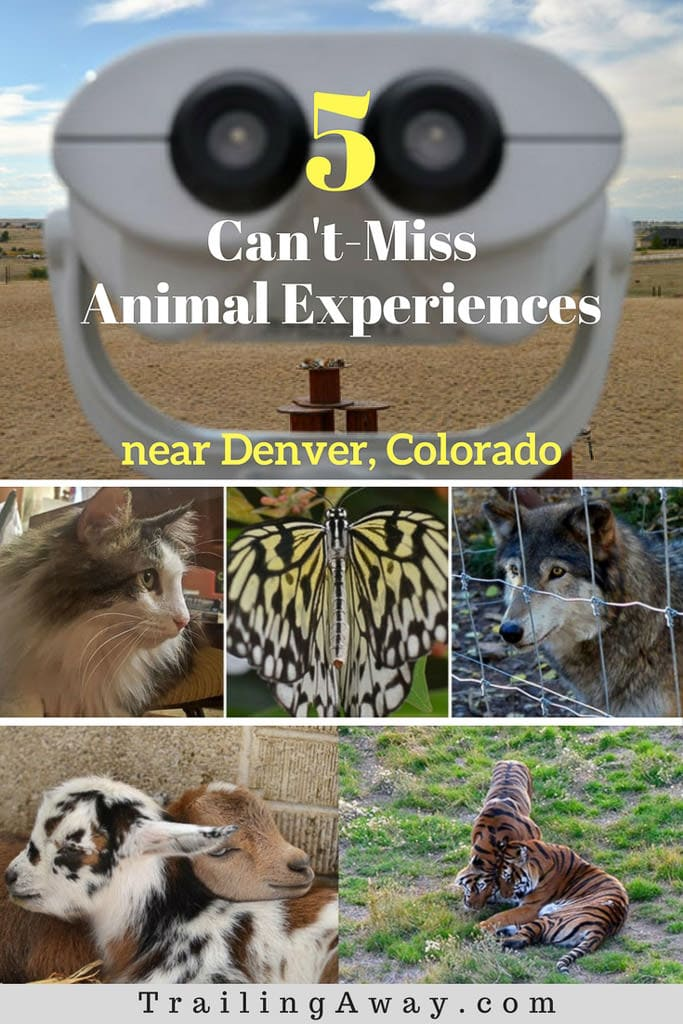 5 Can\'t-Miss Animal Encounters Near Denver