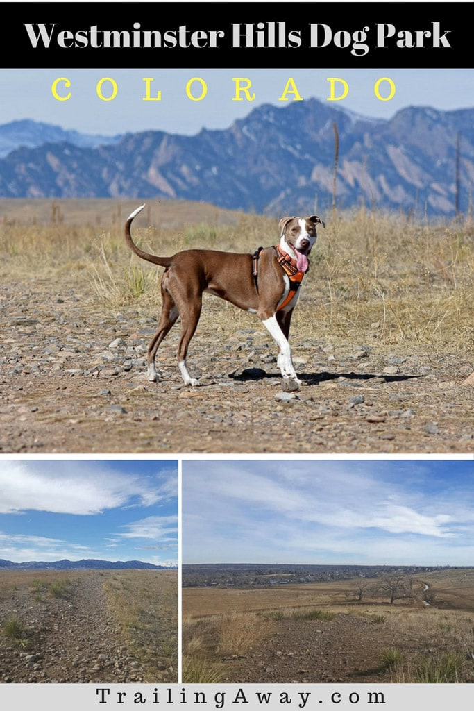 Westminster Hills Dog Park: A Perfect Off-Leash Park!