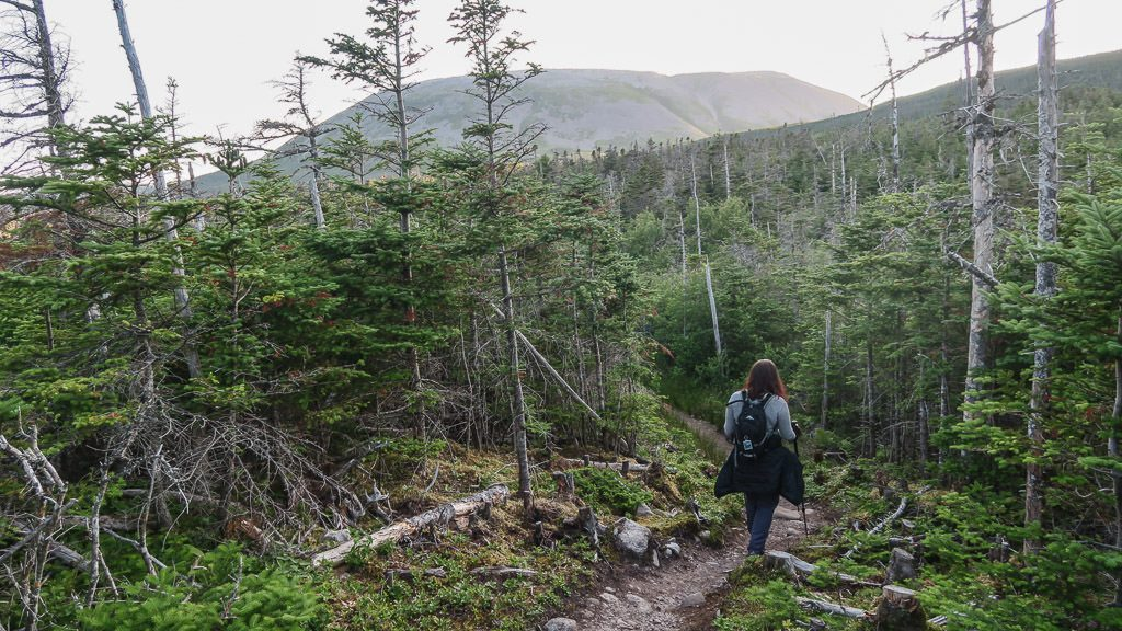 Brooke hiking a wooded section of the trail to Gros Morne Mountain