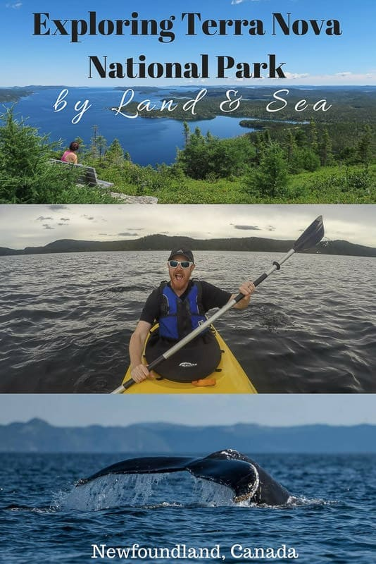 Only exploring Terra Nova National Park in Newfoundland by foot leaves you missing a huge chunk of what makes this park wonderful - the sea! Read about our hiking, kayaking and boating adventures. #canada #newfoundland #terranova #hiking #nationalparks #maritimes #atlanticcanada