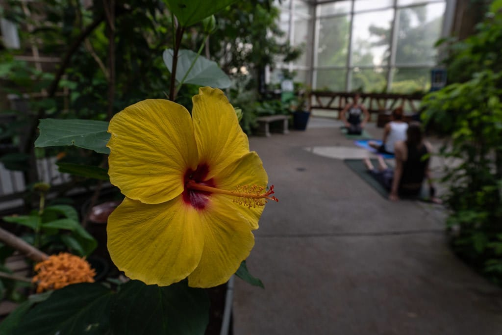 Bright yellow flower in the butterfly garden