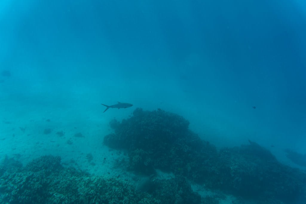 fish that looked like a shark in molokai