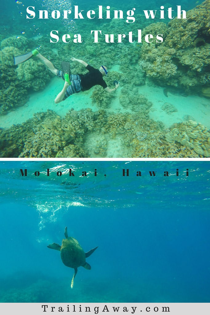 Snorkeling in Molokai with Hawaiian Green Sea Turtles & Reef Fish