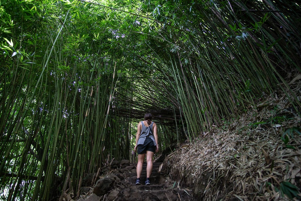 Brooke walking up some stairs as she admires the large bamboo forest in Maui