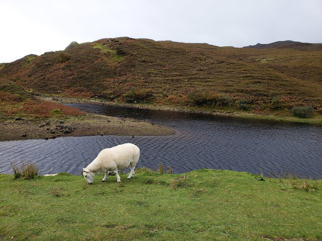 Sheep grazing near a lake in the Isle of Skye