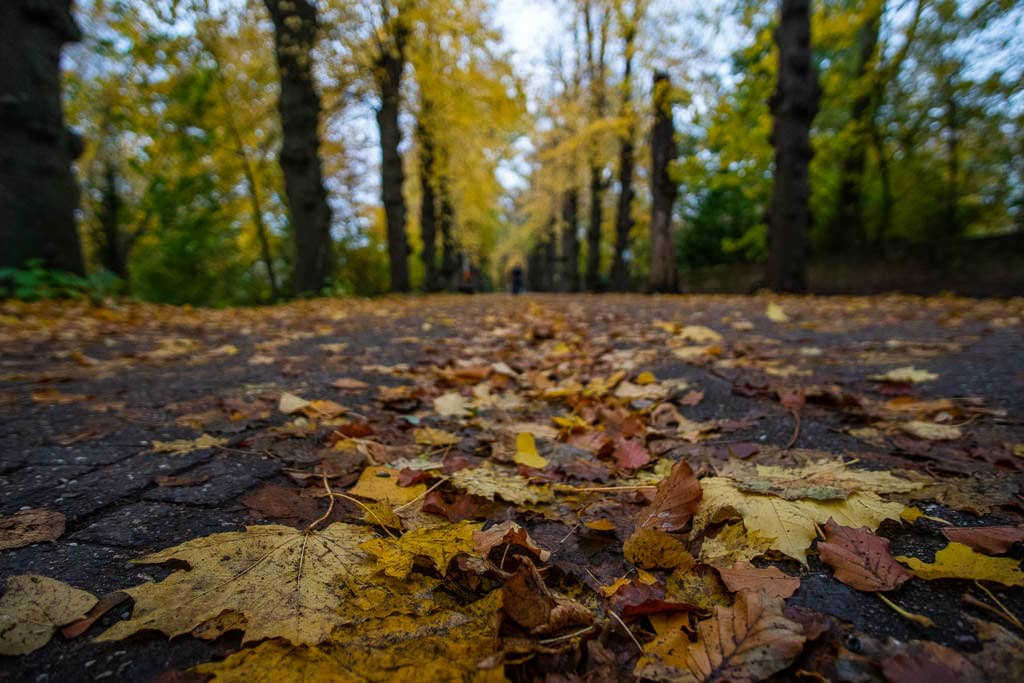 autumn leaves on sidewalk in bruges belgium