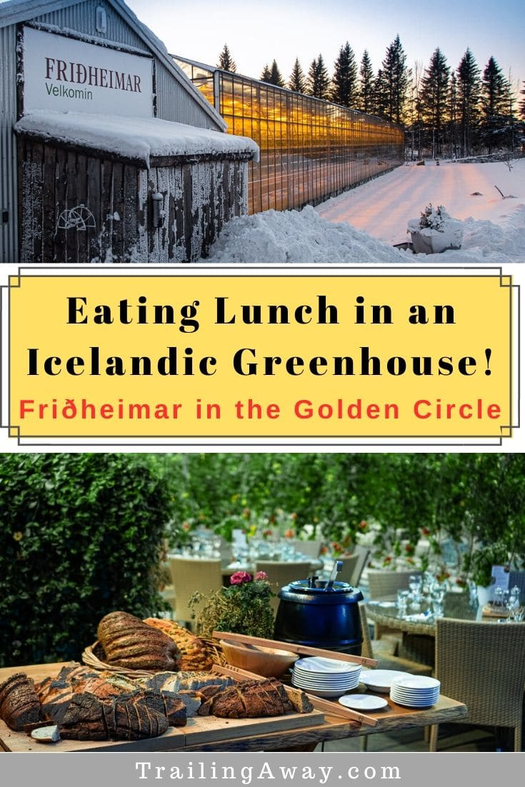 Looking for a unique, healthy, vegetarian-friendly dining experience in Iceland? Look no further than Fridheimar Greenhouse on the Golden Circle Route! #Iceland #GoldenCircle #Fridheimar #Greenhouse #Vegetarian