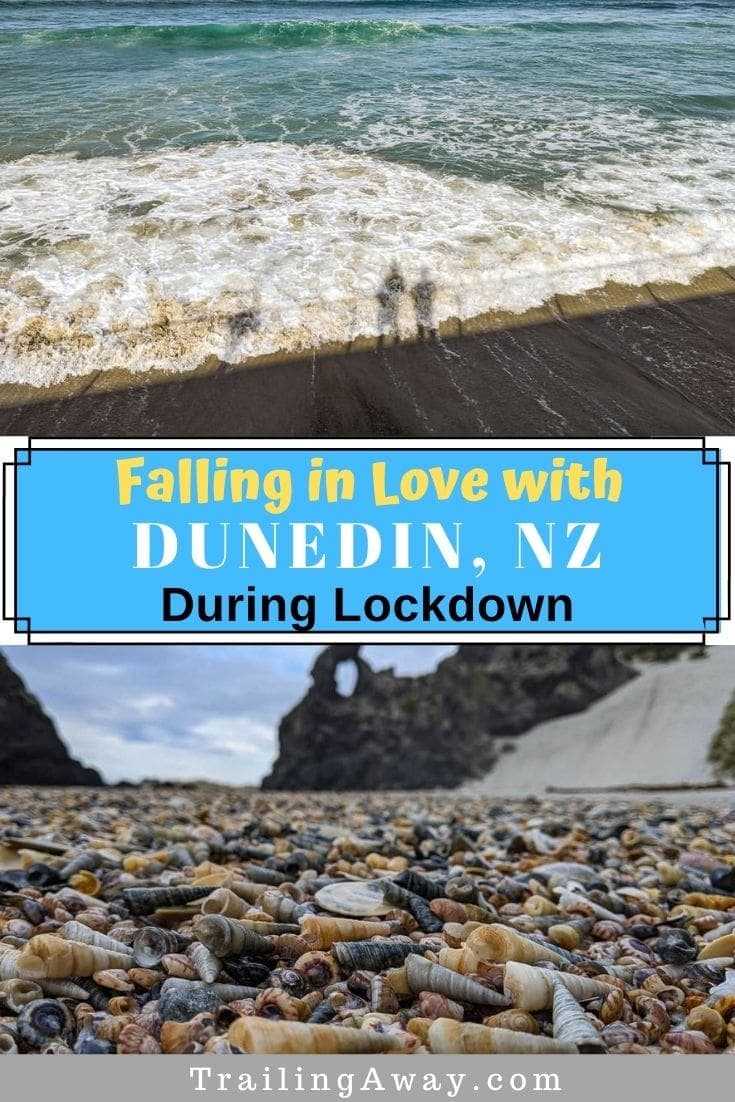 Falling in Love with Dunedin, NZ, During Lockdown