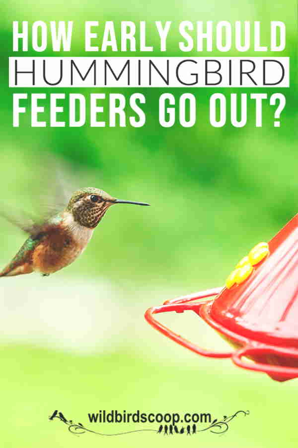 "A hummingbird at a hummingbird feeder with text that reads ""how early should hummingbird feeders go out?"""