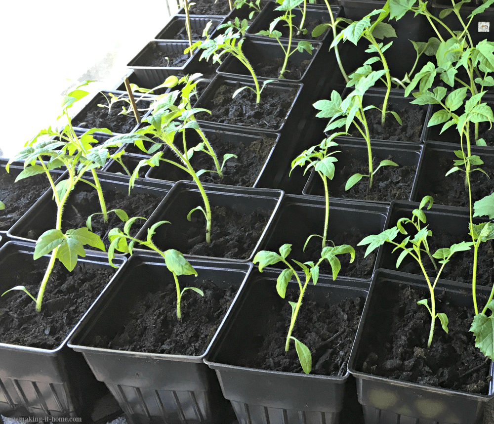 Making It Home Tips for Starting a Garden ~ Get Ready for Spring Planting