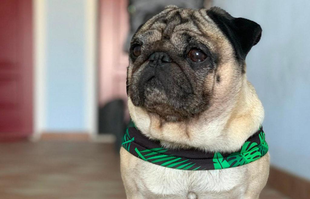 Pettorine Extreme - Pimp My Pug