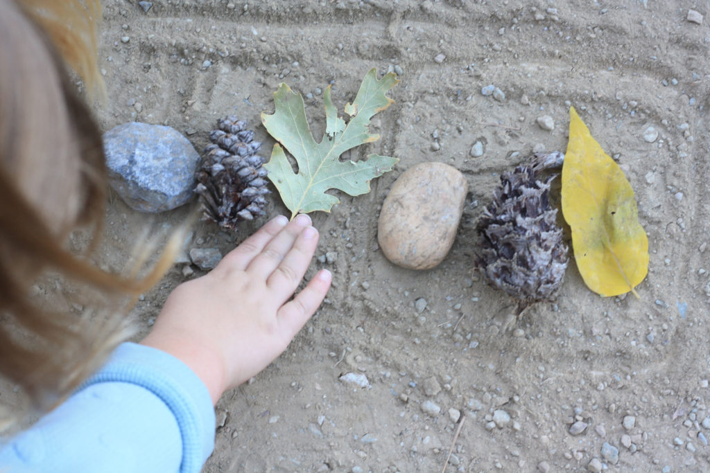 Collecting Nature Items 11 WinterKids Nature Patterns
