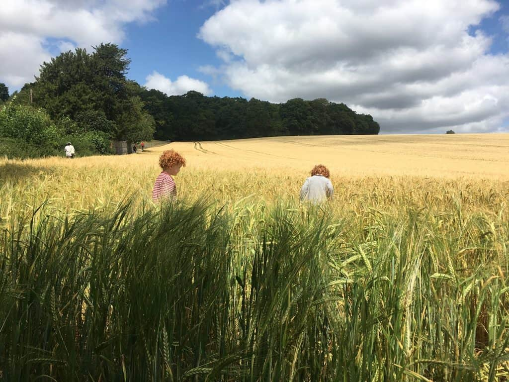 OLD AMERSHAM: Liam and Santiago exploring the field