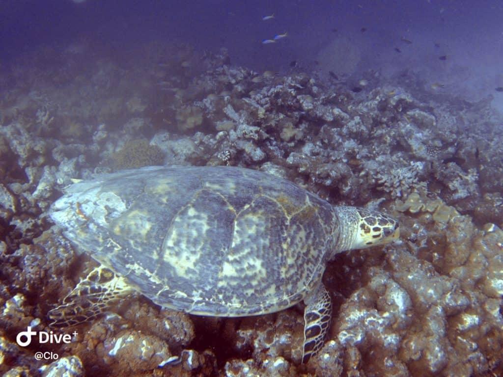 Sea turtles excursions