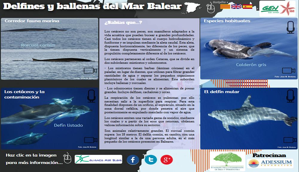 Dofins i balenes de la Mar Balear
