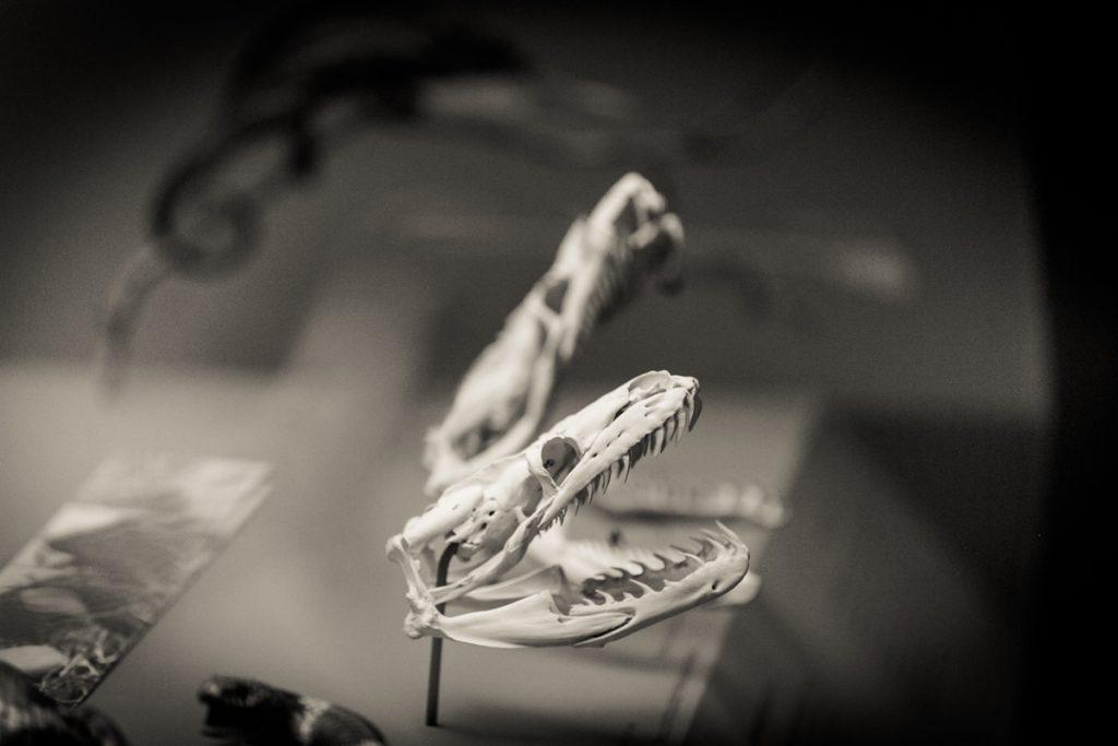 Fine art portrait series on bones by NYC photographer, Kelly Williams