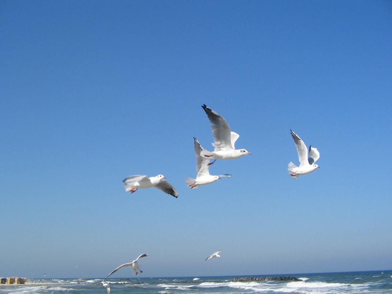 baltic-sea-22521_1280