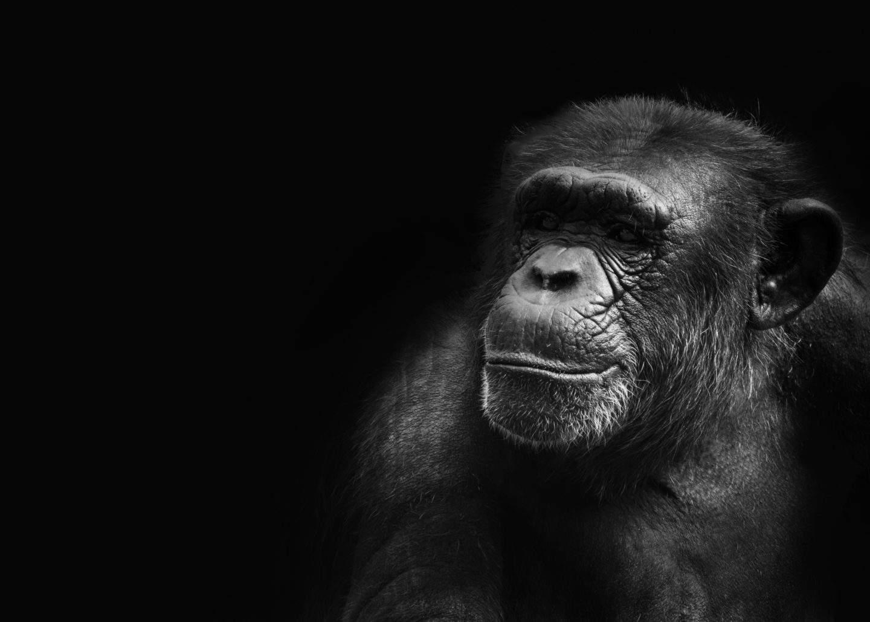 extraveganza živali