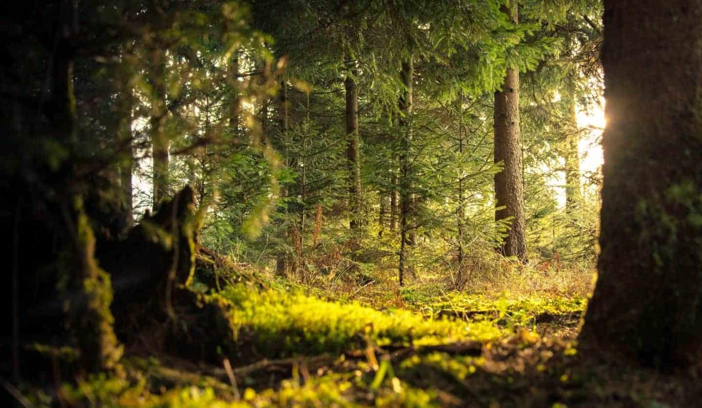 extraveganza shinrin yoku gozdna kopel
