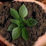 earth-Bild-von-annca-auf-Pixabay