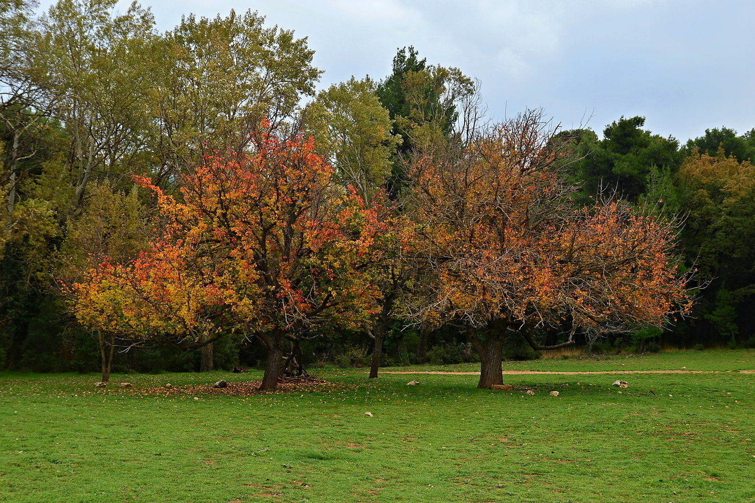 Tatoi Royal Estate