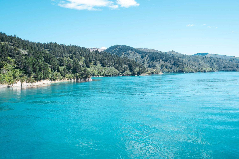 Türkisblaues Wasser im Queen Charlotte Sound vor der Küste der Südinsel