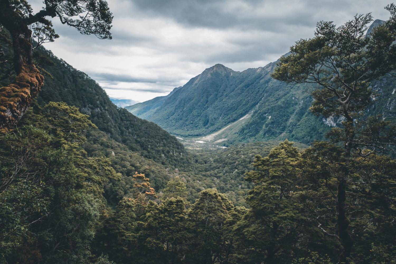 Blick in ein bewaldetes Tal