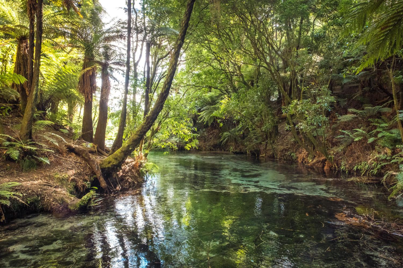 Dickicht am Ufer eines Flusslaufs im Hamurana Springs Park