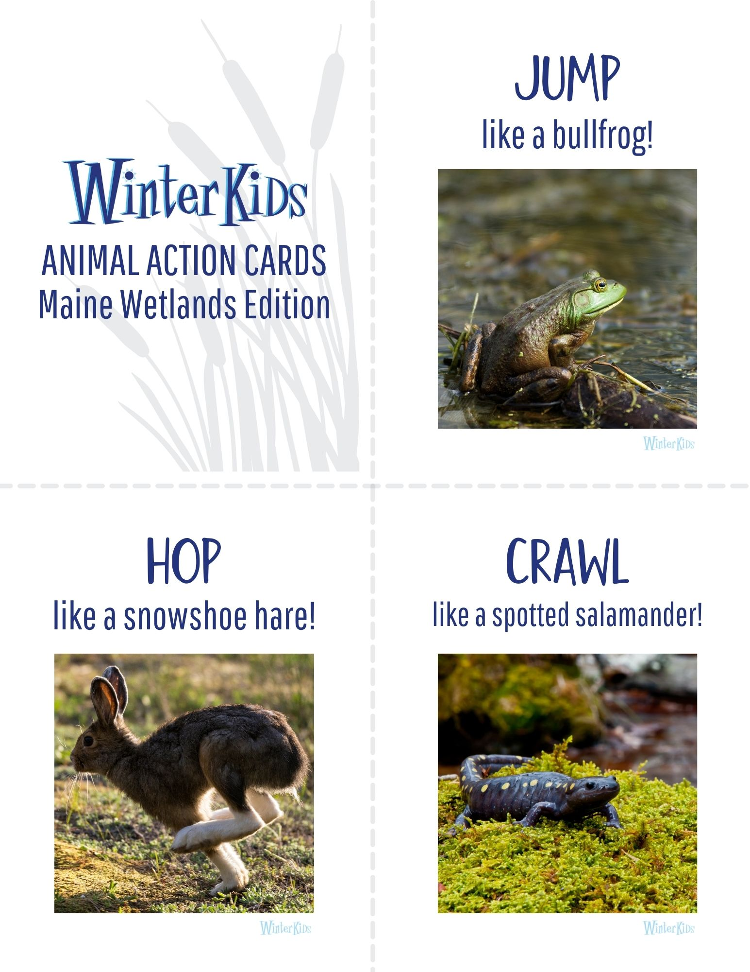 Animal Action Cards Maine Wetlands Edition 1