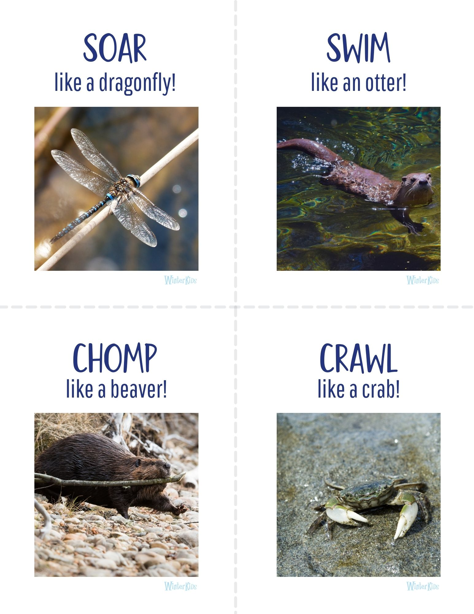 Animal Action Cards Maine Wetlands Edition 2