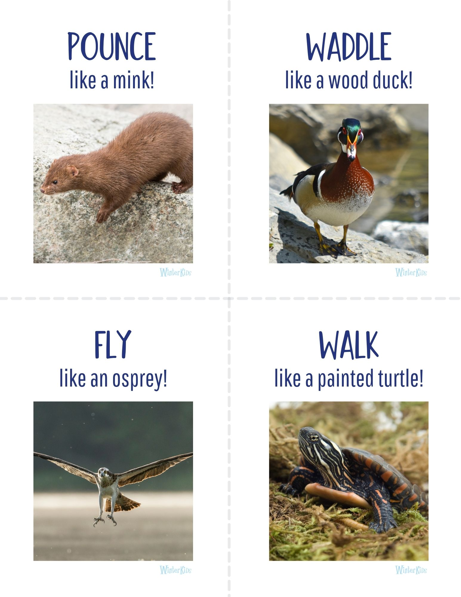 Animal Action Cards Maine Wetlands Edition 3