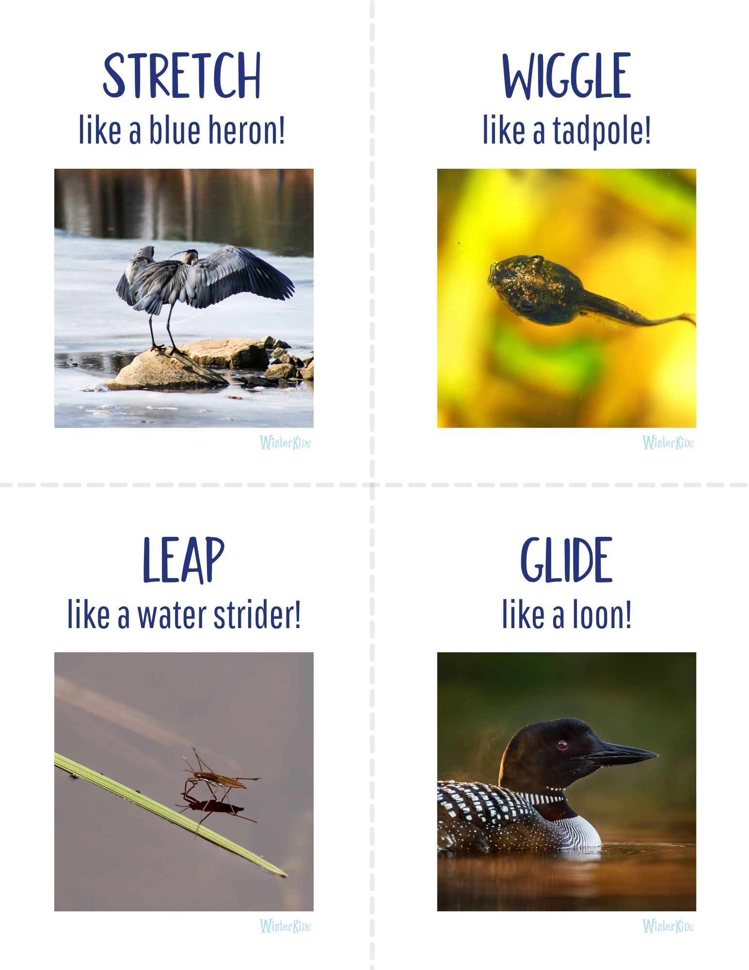 Animal Action Cards Maine Wetlands Edition 4