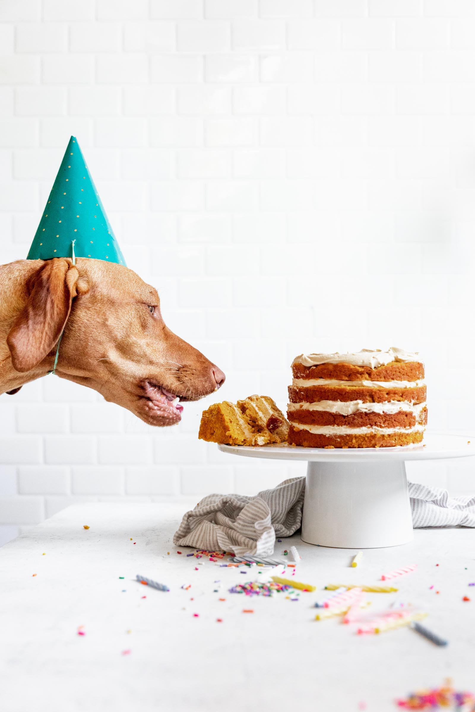 Superb Dog Birthday Cake Recipe How To Make Cake For Your Dog Funny Birthday Cards Online Elaedamsfinfo