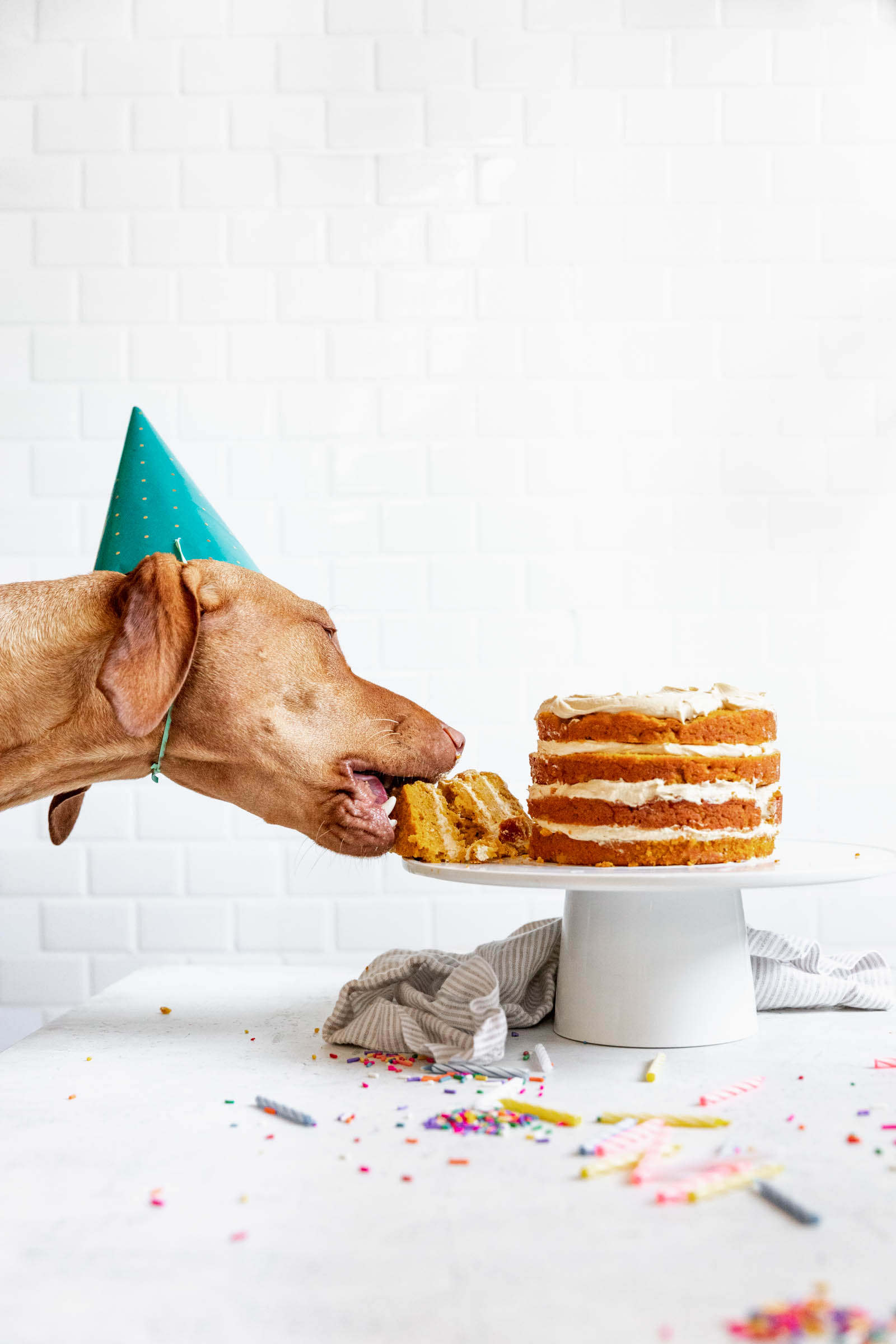 Astonishing Dog Birthday Cake Recipe How To Make Cake For Your Dog Personalised Birthday Cards Paralily Jamesorg