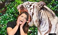 A las vegas green screen photo booth featuring a woman putting her head in a lion's jaw.