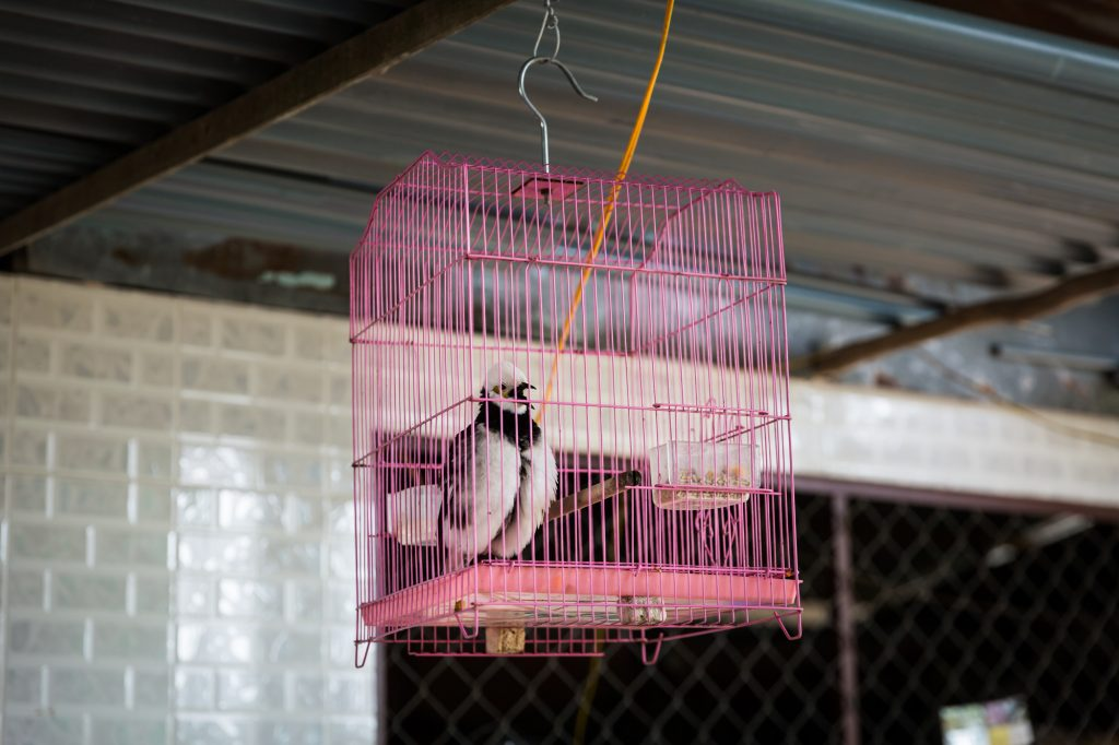 Bird in cage for an article on the Cai Be Floating Markets