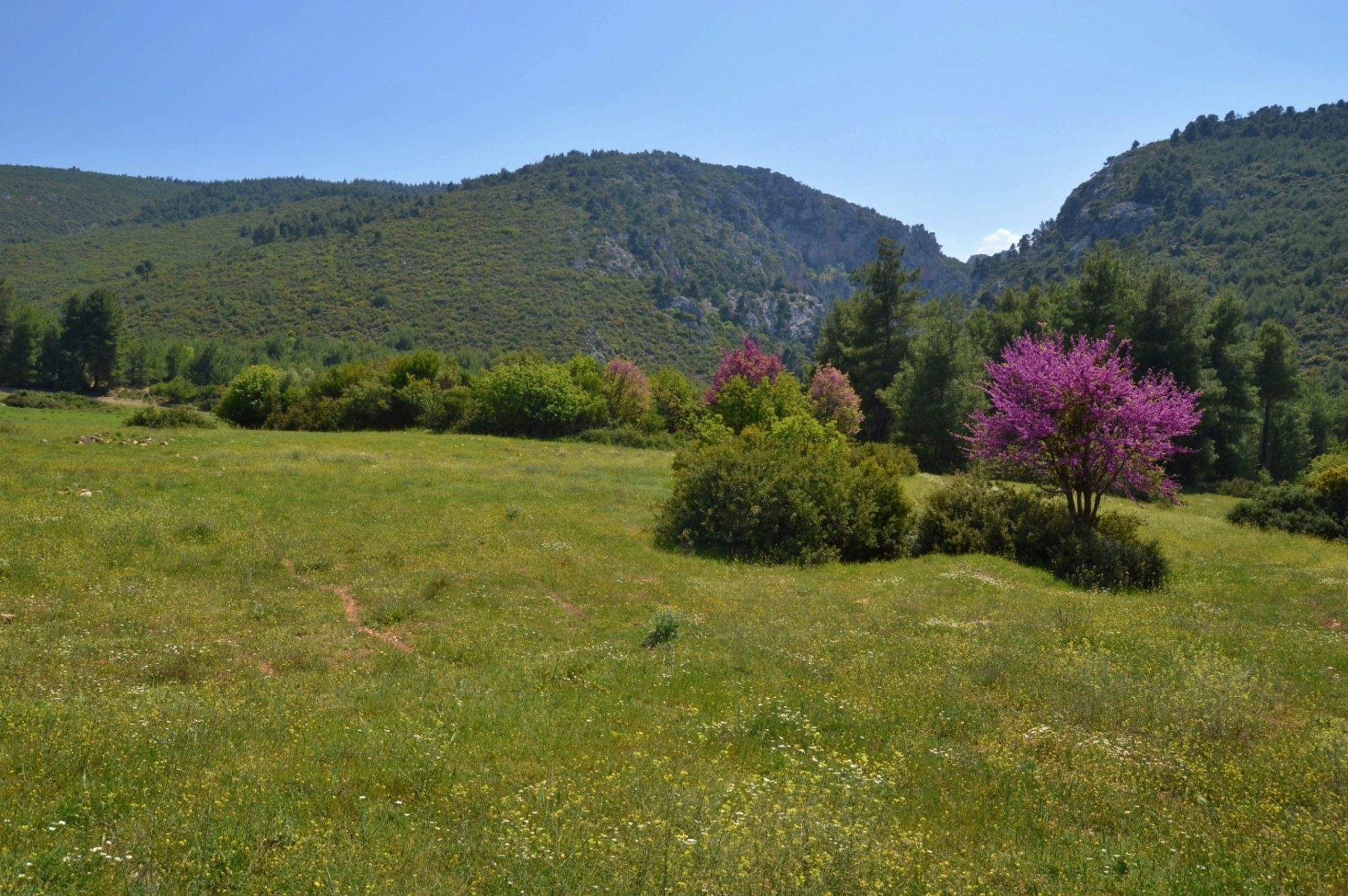 The colourful spring countryside of Greece