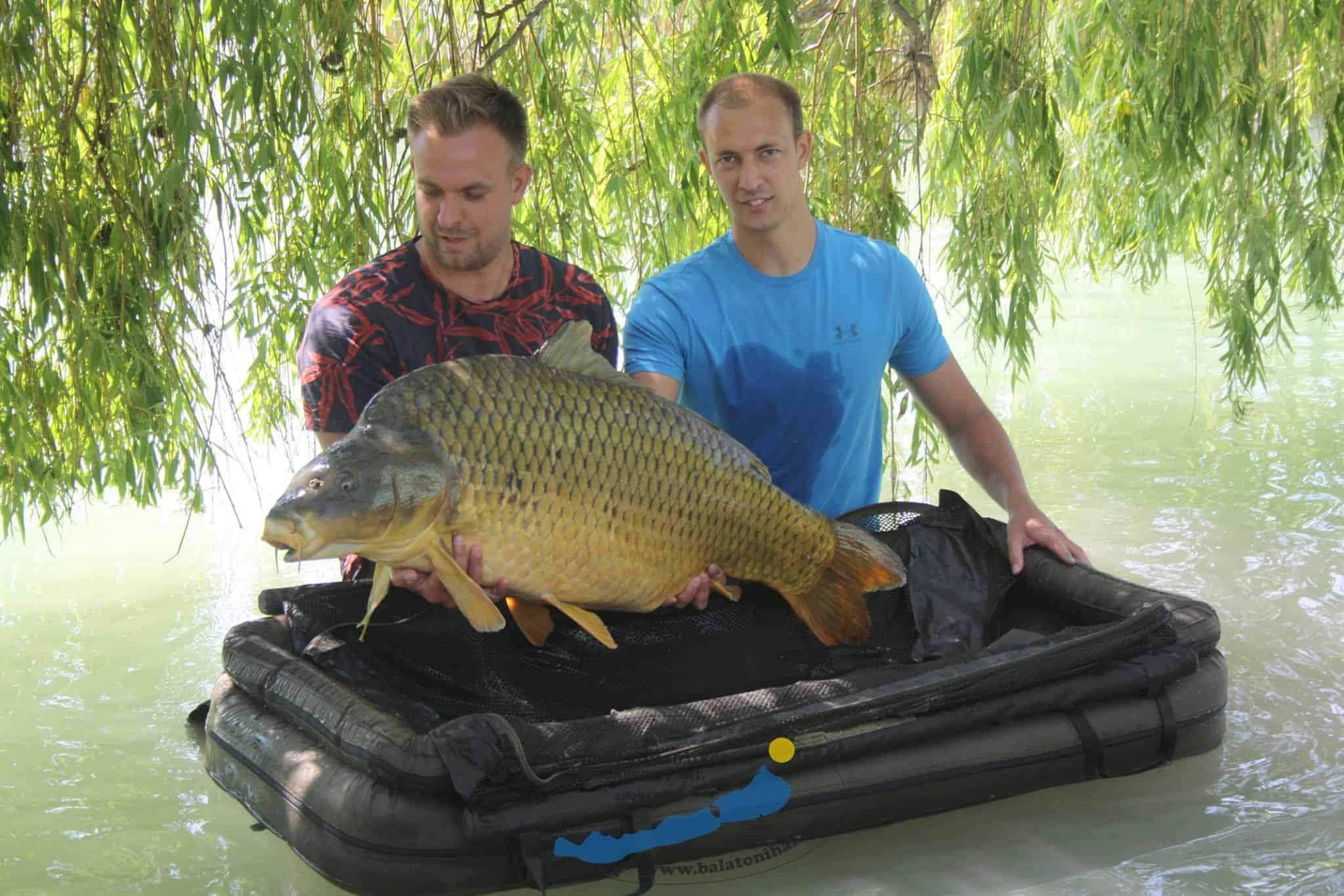 balatoni pontyrekord legnagyobb hal