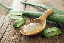 آلوئه ورا + تأثیر این گیاه دارویی در رفع نشانه های پیش دیابتیک
