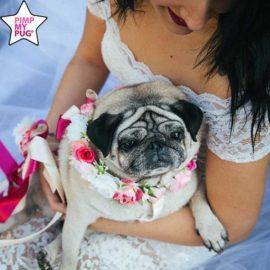 pettorina per matrimonio o cerimonia personalizzata per carlini bulldog cani